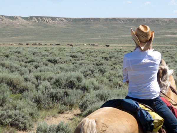 wyoming mustang horse adventures