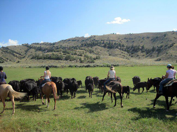 horseworks wyoming cattle drive