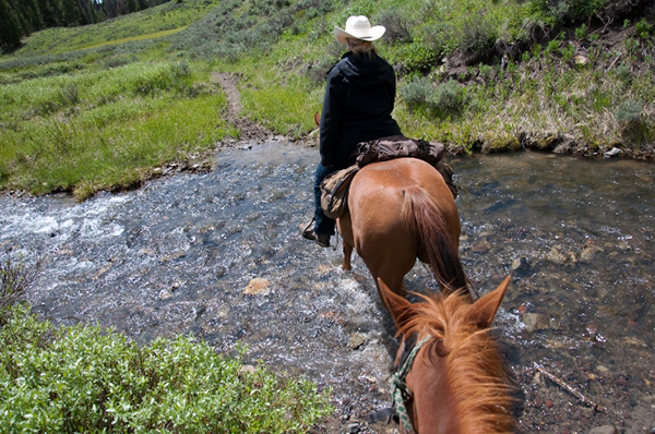 yellowstone national park horseback