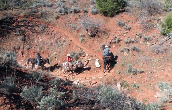 zion national park horse trails equine